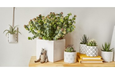 Gifts Ideas for Plant Lovers